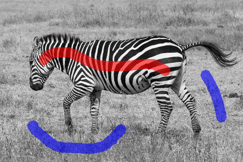 courses:b4m33dzo:labs:zebra_brush.png