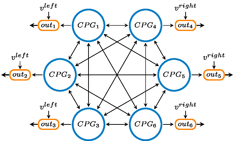 CPG network structure
